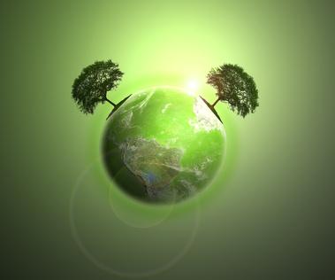 Terre à feuilles